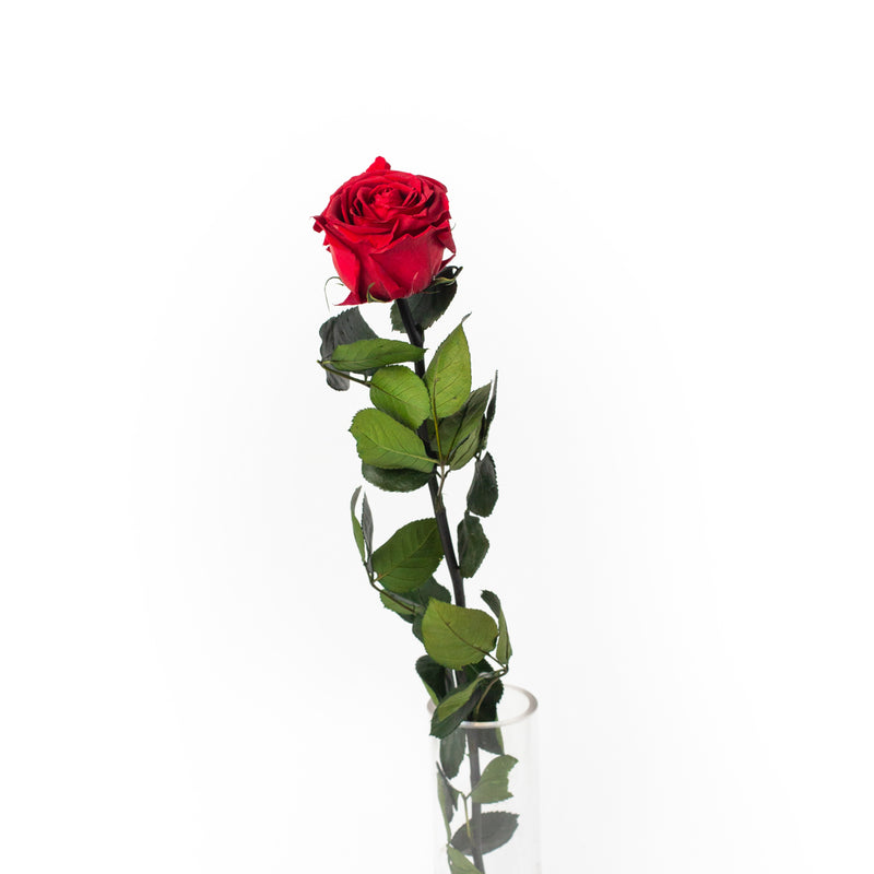 Long stem preserved red rose, by Tickled Floral in Sherwood Park, delivery to Edmonton, Beaumont, St.Albert