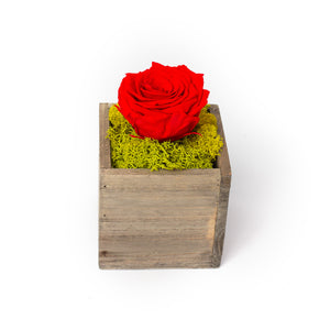 preserved red rose in a wooden box, by Tickled Floral in Sherwood Park, delivery to Edmonton, Beaumont, St.Albert