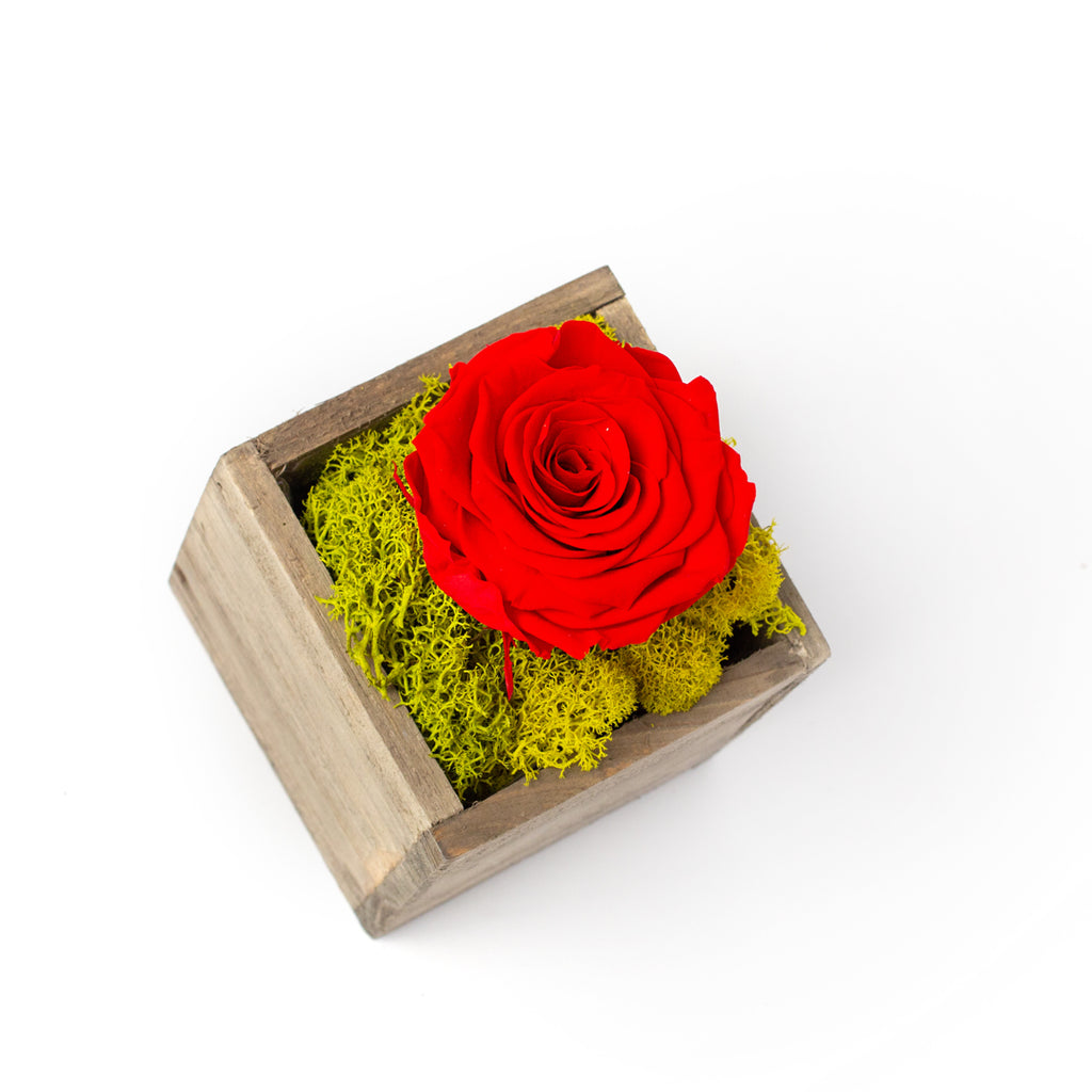 Single Blossom Preserved Rose in Wood Box