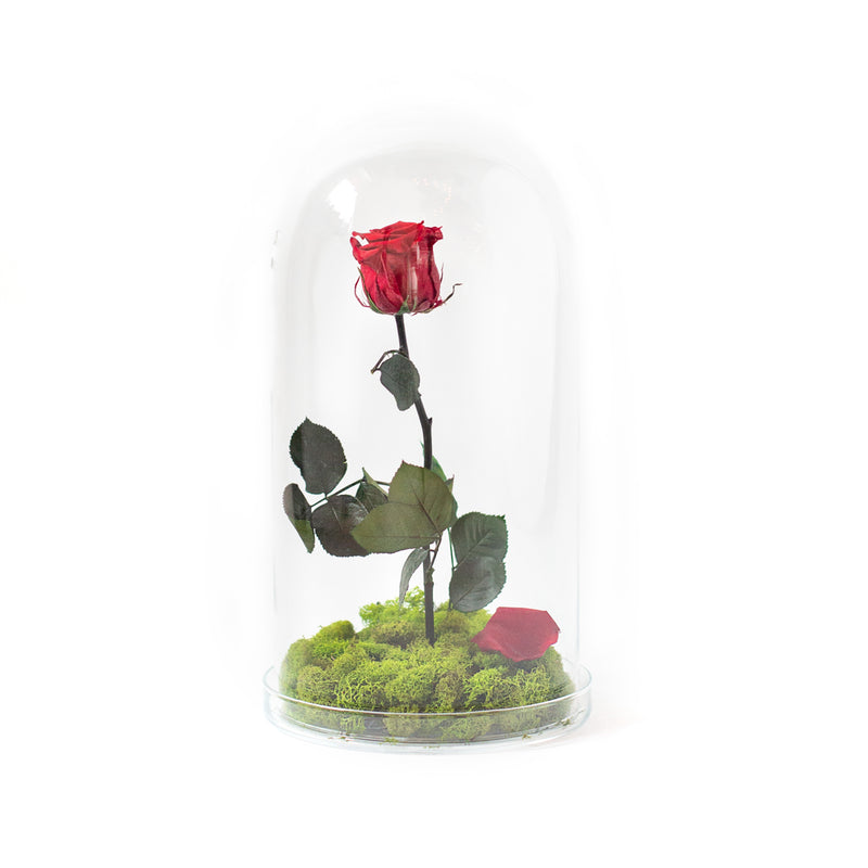 Single Stem Preserved Rose in Glass Cloche