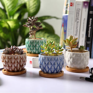 Succulent Inc. - Pineapple Succulent Planter with Bamboo Trays - Set of 2 - Free Shipping and Taxes Included