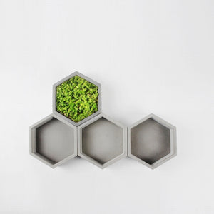 Succulent Inc. - Shallow Hexagon Concrete Planter Silicone Mold - Free Shipping and Taxes Included