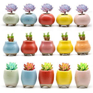 Succulent Inc. - NEW! Mini Succulent Planter Sets - Free Shipping and Taxes Included