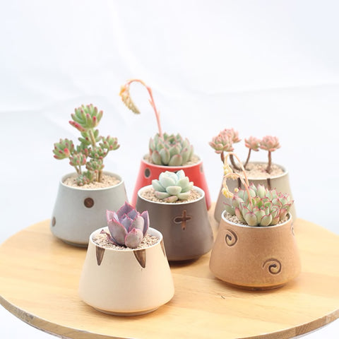 Succulent Inc. - Japanese Styled Succulent Planter Set of 6 - Free Shipping and Taxes Included