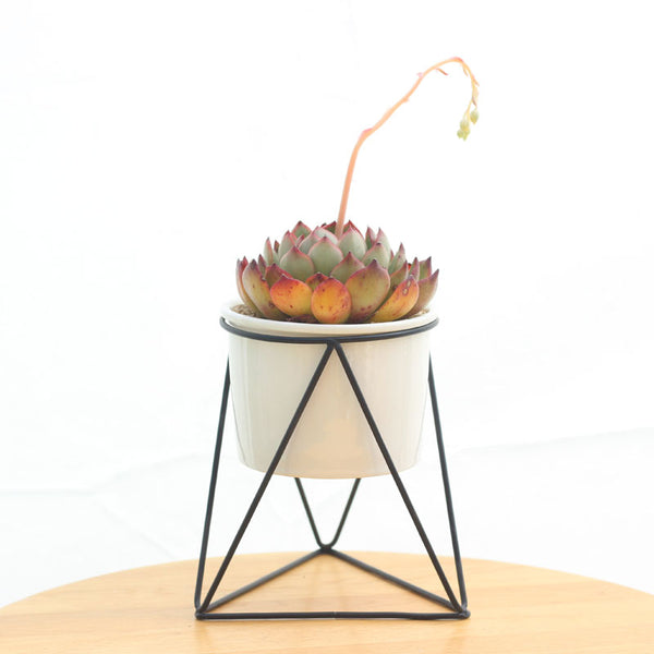 Succulent Inc. - Mid Century Modern Ceramic Succulent Planter with Metal Stand - Free Shipping and Taxes Included