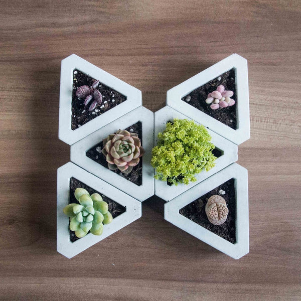 Succulent Inc. - Triangle Geometric Concrete Planter Mould - Free Shipping and taxes included