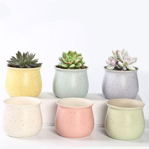 Succulent Inc. - Speckled Egg Style Ceramic Succulent Planter Set - Free Shipping and Taxes Included