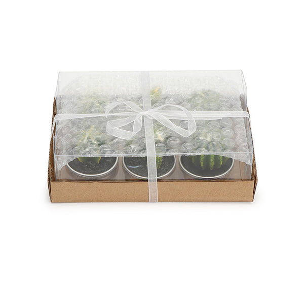 Succulent Inc. - 6pcs Non-spill Cactus Candle - Free Shipping and taxes included