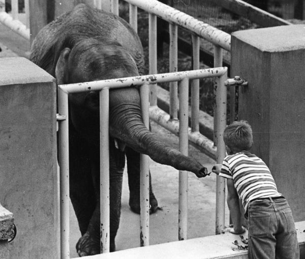 Candy the elephant at the Weed Park Zoo, 1962. -- Muscatine Journal