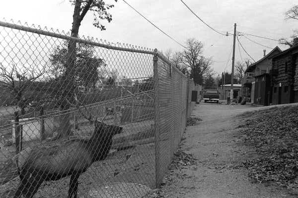 Elk pen at Weed Park Zoo, 1977. -- Muscatine Journal