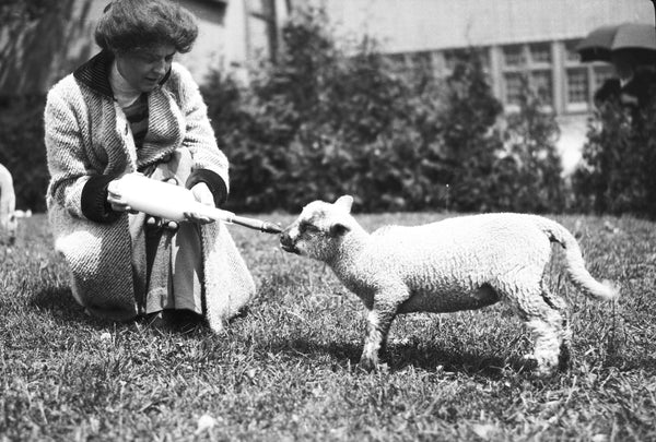 A woman feeding a lamb on Heart's Delight Farm in June, 1913. -- Courtesy Miner Institute