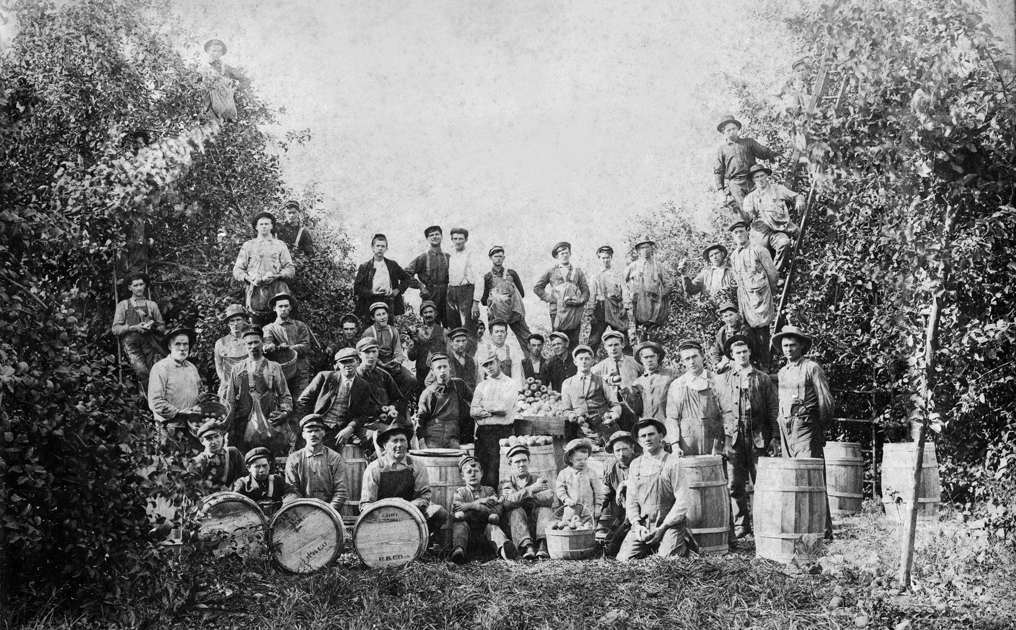 Orchard workers on the J.N. Thatcher Farm and Orchard, 1912. -- Courtesy Karen Thatcher