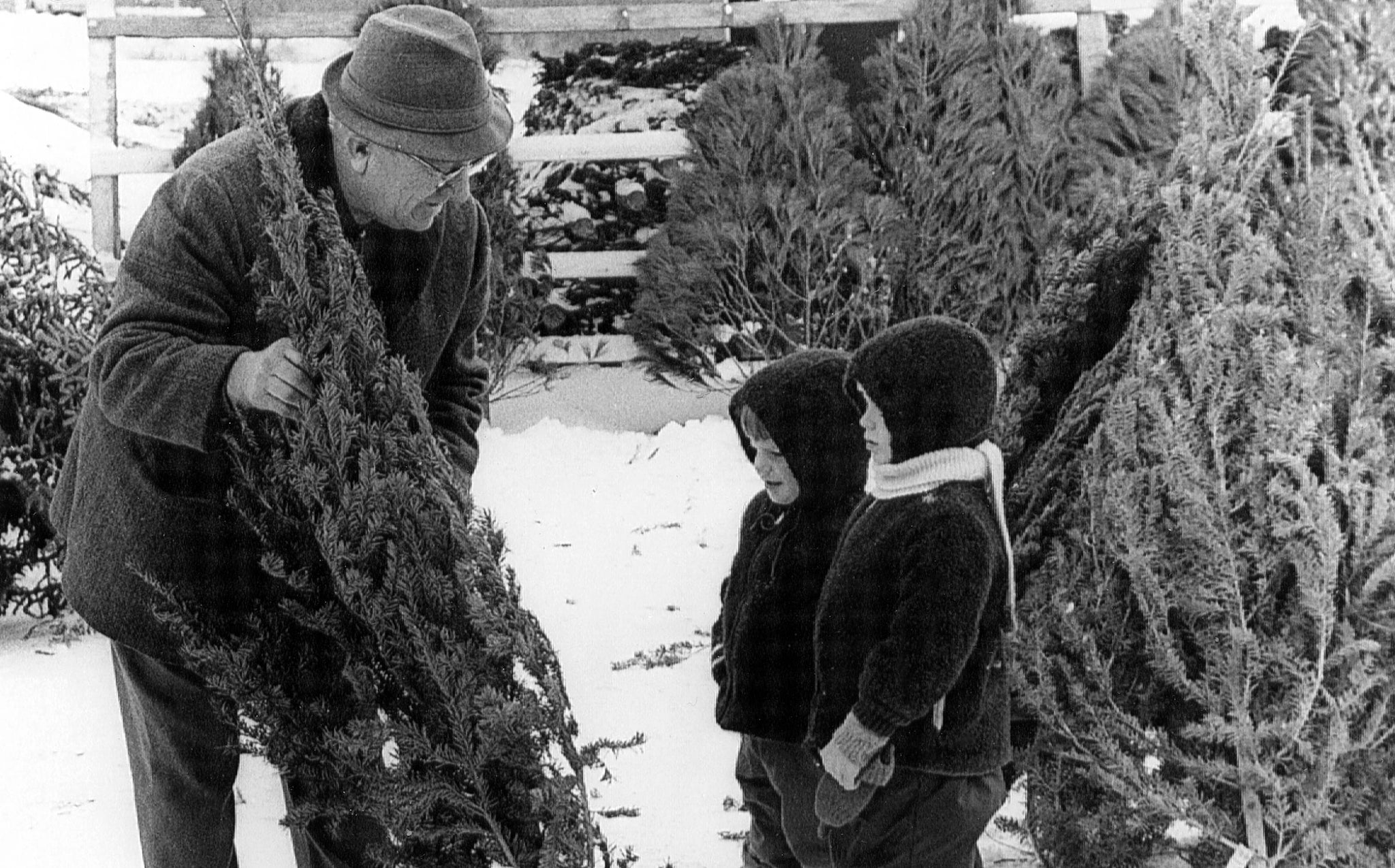 Grandpa Steckler helps Todd and Scott Steckler choose a Christmas tree in the Mandan Lions Christmas tree lot, Mandan, 1969. -- Helen Steckler