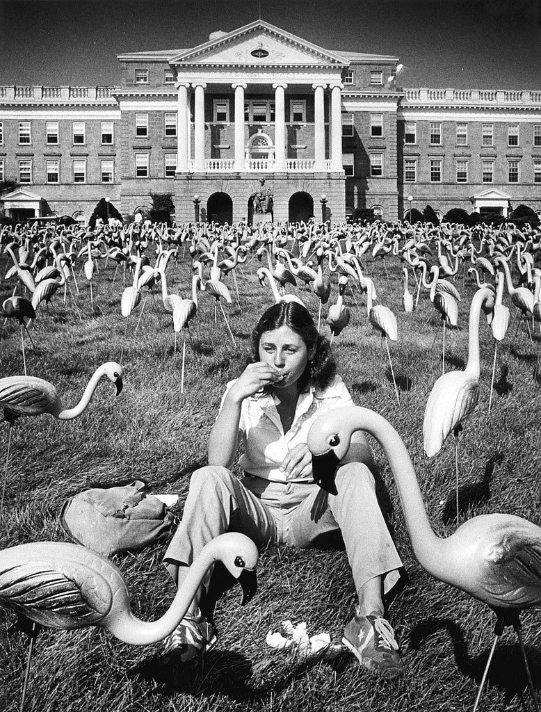Among the most well-known pranks at UW-Madison was the 1,008-strong flock of pink flamingos that appeared in September 1979, on Bascom Hill. Varjian, who helped pull off the stunt, said the problem of storing the 84 dozen flamingos was solved when students began taking them. -- L. Roger Tuner / Wisconsin State Journal