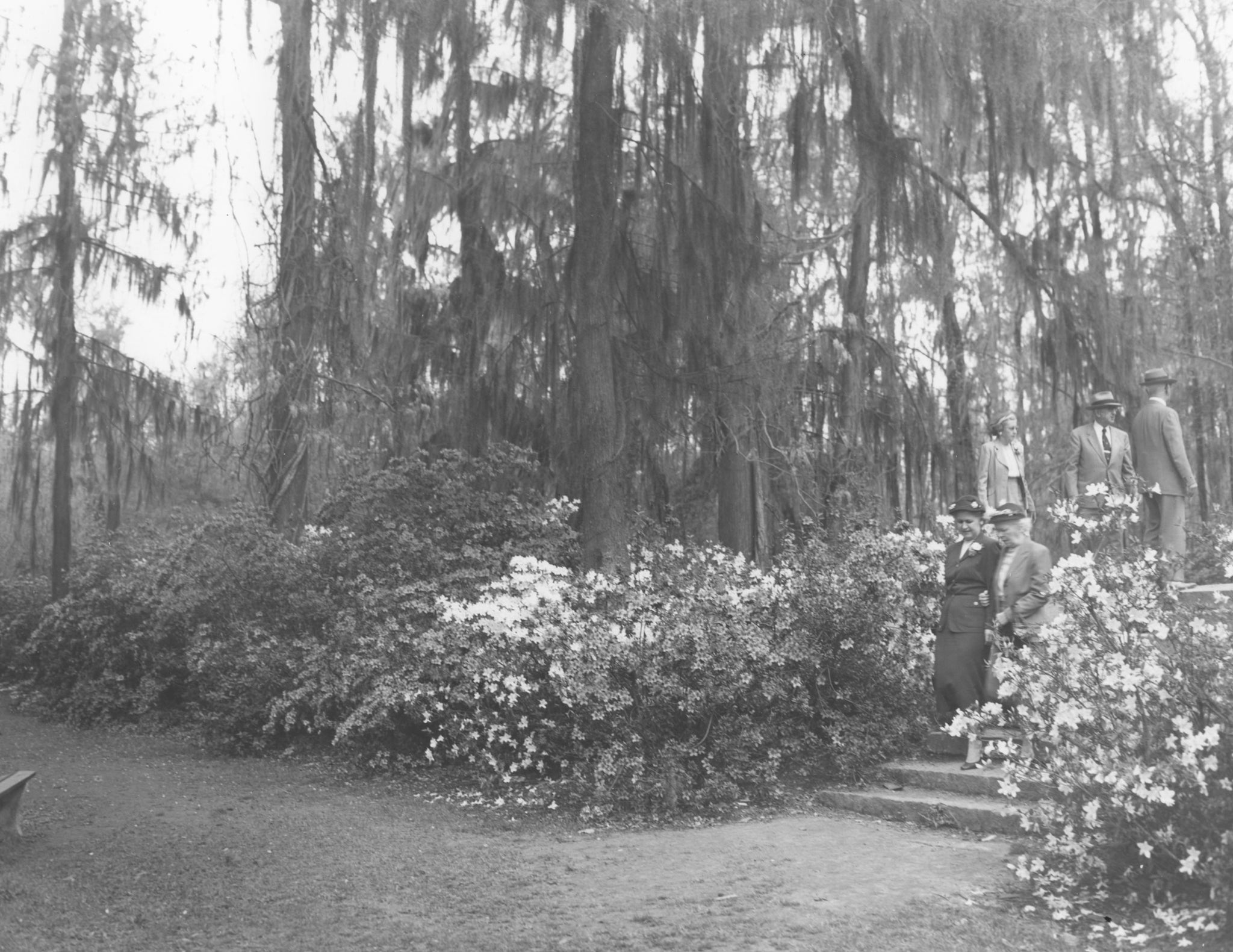 Visitors enjoy the blooming azaleas at Edisto Memorial Gardens, circa 1950. -- Chamber of Commerce