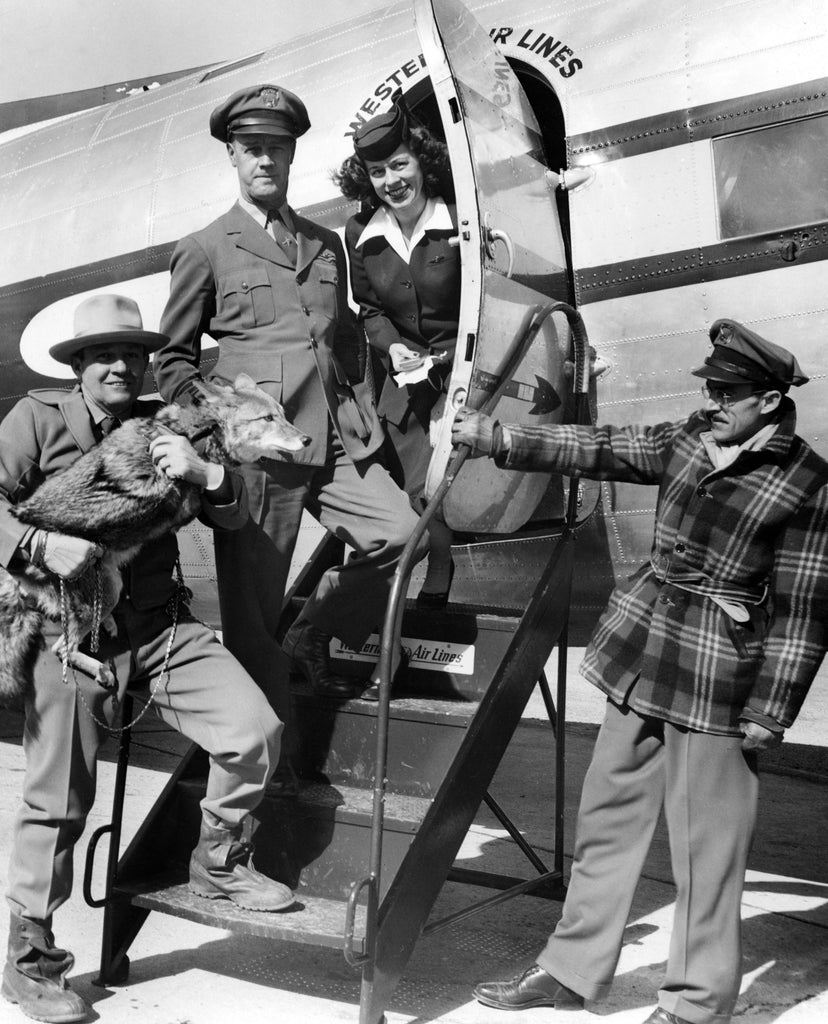 """Coyote"" Fred Borsch and Tootsie the Singing Coyote promoting the new Western Air Lines Spearfish-Rapid City route, 1958. -- Courtesy Deadwood History, Inc."