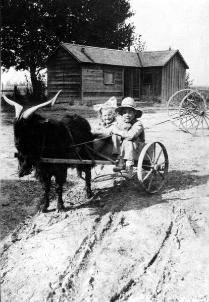 "Ralph Eli Shotwell and Esther Shotwell riding in their Anatolian goat-powered wagon at Grandview Drive and Falls Avenue, Twin Falls, 1918. In the background is the family's ""prove-up"" house the Shotwells built in order to satisfy homestead regulations. The Shotwells came from the Parma area in 1907. -- Courtesy Kathy Williams"
