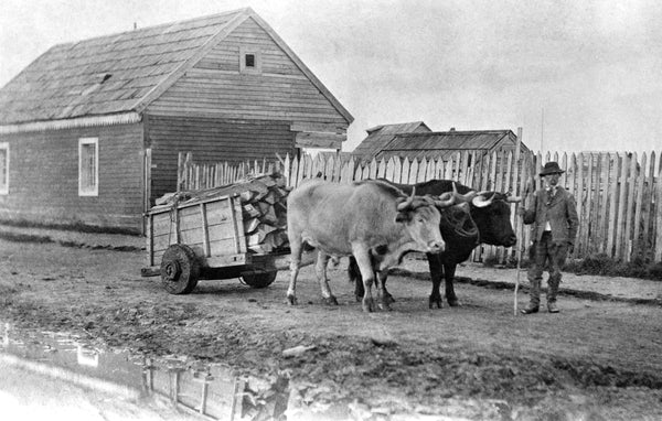 Ox cart in an alley behind front-row quarters, Mare Island Naval Shipyard, 1860. During Mare Island's early years, ox carts were used to haul cord wood, equipment and other supplies. The first team of oxen was brought to Mare Island during the Navy Yard's first week of operation in 1854. -- Courtesy Vallejo Naval and Historical Museum