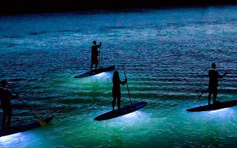 LED SURF CLICKIBEY VERANO SUMMER SUP BOARD LED CLICKIBEY WORLDWIDE