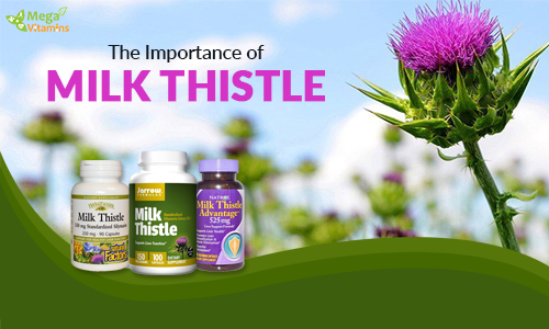 The Importance of Milk Thistle Supplements