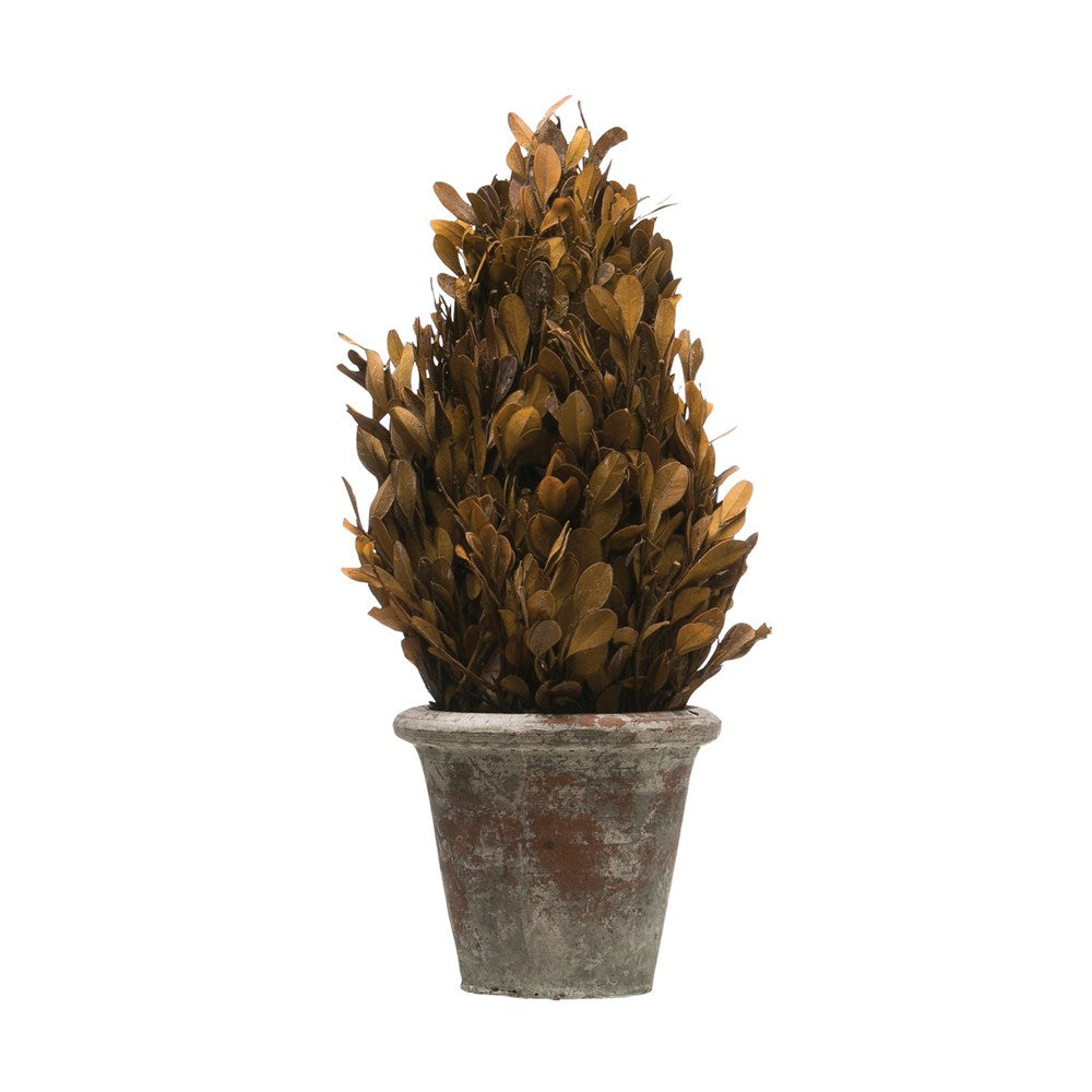 Preserved Boxwood Topiary in Clay Pot, Brown