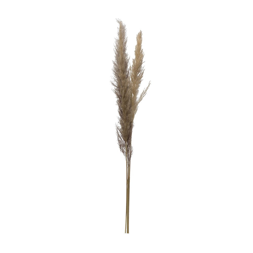 Dried Natural Pampas Grass Bunch