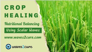 Crop Healing Using Scalar Waves