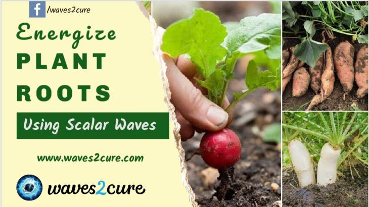 Energize Plant Roots Using Scalar Waves