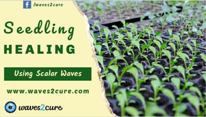 Seedling Healing Using Scalar Waves