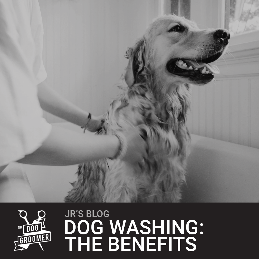 The Importance Of Washing Your Dog