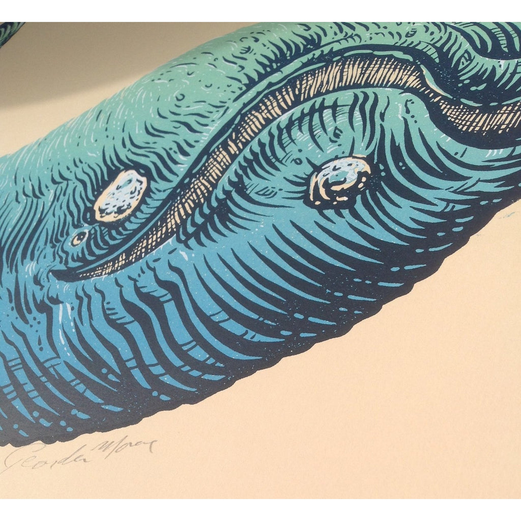 "Right Whale - Horizontal Print - 16"" x 20"""