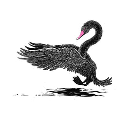 Black Swan I - Silkscreen Art Print - Nova Scotia - 16 x 20