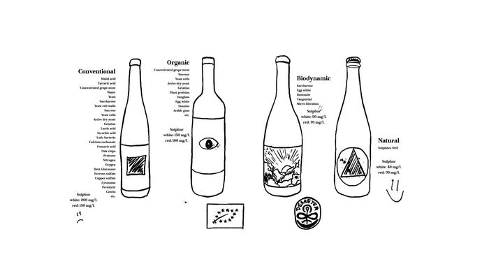 Conventional vs organic, biodynamic or natural wine