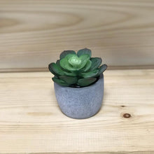 Load image into Gallery viewer, Small Succulents in Cement Pot