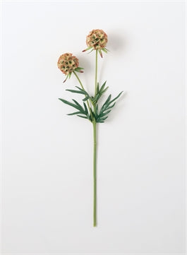 Scabiosa Stem - The Rustic Barn CT
