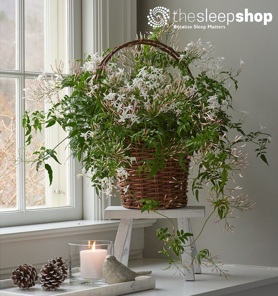 5 plants that will help you sleep better