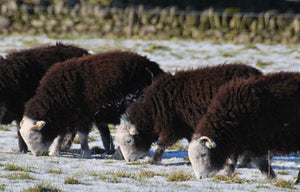 Whole Herdwick Lamb Hogg