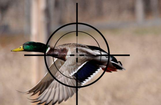 Durabak for Duck Hunting
