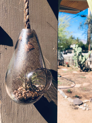 Metallic Smokey Gray Blown Glass Hanging Terrarium