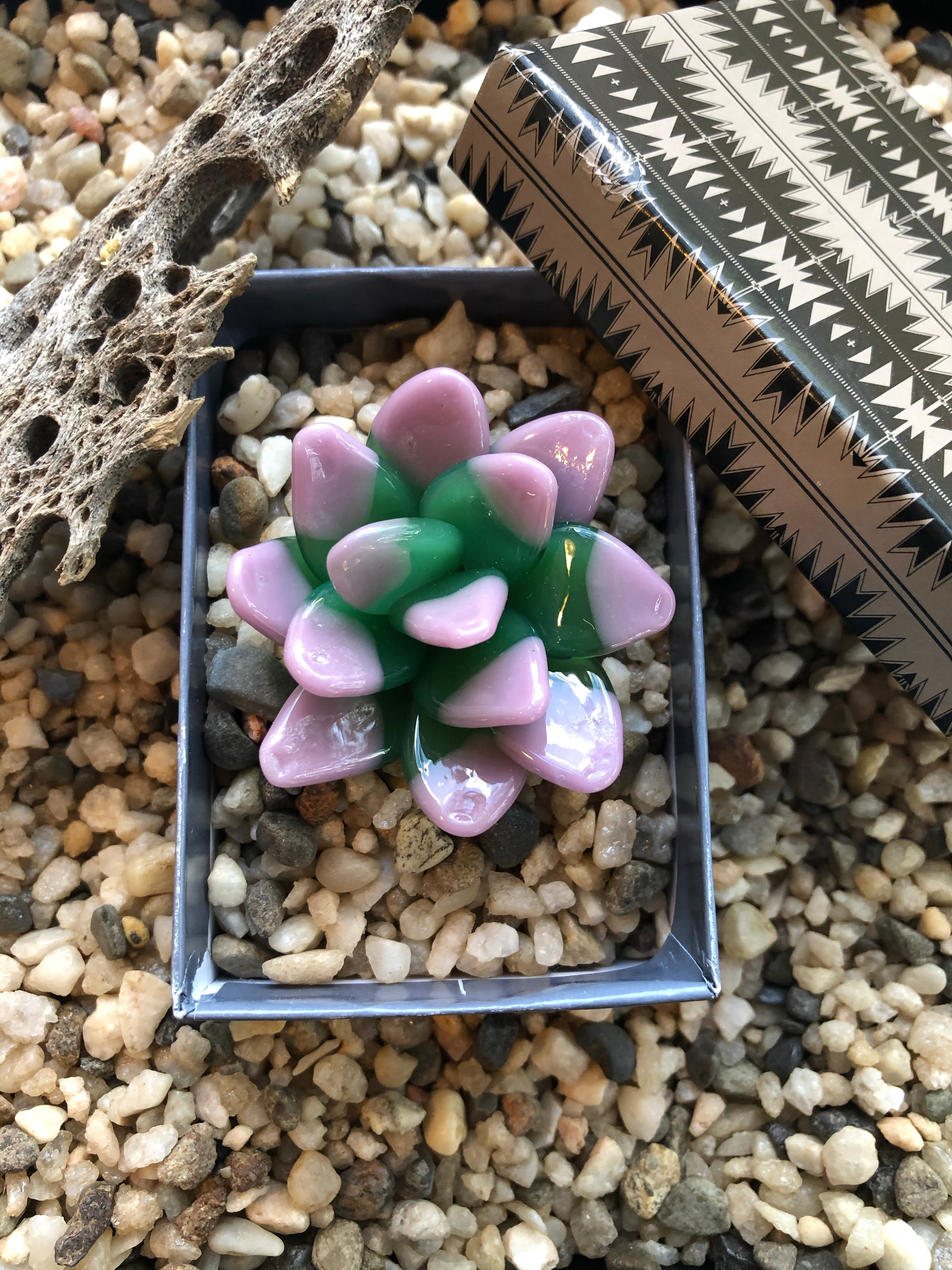Glass Echeveria Candy Succulent