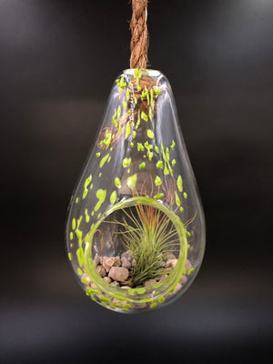 Lime Green Glass Hanging Terrarium