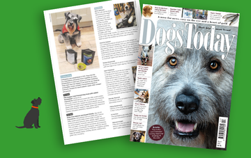 Did you see us in Dogs Today magazine?