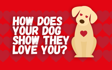 How does your dog show you they love you?