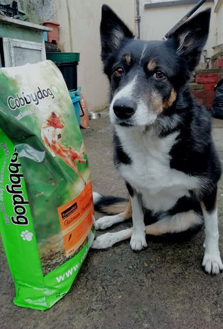 Boo with cold pressed dog food with Turmeraid