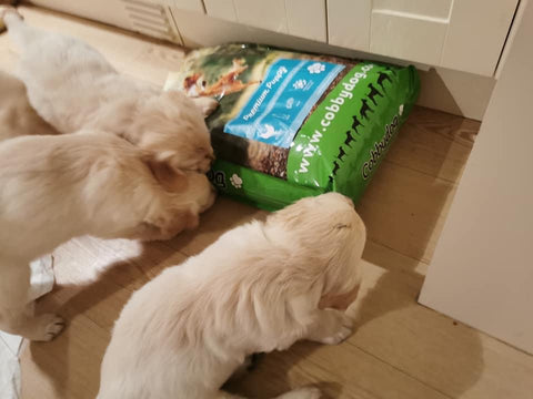 Puppies with dog food
