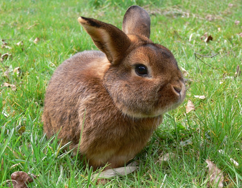The 10 Most Important Bunny Facts of All Time