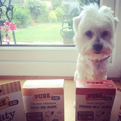 THANKS DYLAN AND KIRSTY FOR LETTING US KNOW PURE PASSED THE FUSSY DOG TASTE TEST!