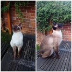 I tried my two Siamese boys on your Pure cat food and they both absolutely loved it!