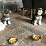 """OUR 2 MINIATURE SCHNAUZERS WHO ARE VERY FUSSY EATERS LOVE IT !!"