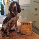 """THIS IS IMPY, SHE IS A 7 1/2 MONTH OLD BRACCO ITALIANO AND FINDING A FOOD TO SUIT HER WAS A CHALLENGE TO SAY THE LEAST"""